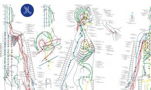 planche acupunture (1)